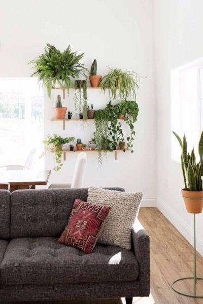 Tanaman menjadikan kamu lebih nyaman di apartemen